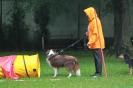 Dog-Walk_23