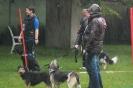 Dog-Walk_42