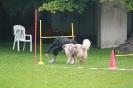Dog-Walk_5