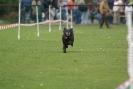 Hunderennen_35