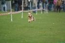 Hunderennen_45