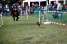 Hunderennen_15