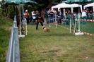 Hunderennen_20