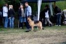 Hunderennen_7